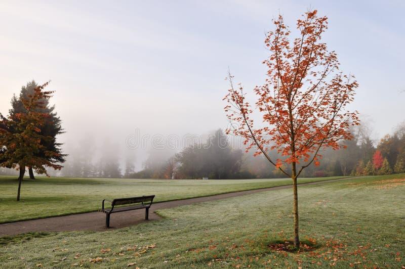 Het mistige park van het hertenmeer in de herfst royalty-vrije stock afbeelding