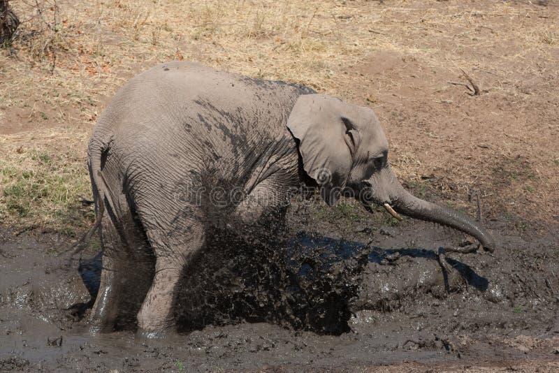 Het modderbad van de olifant stock afbeelding