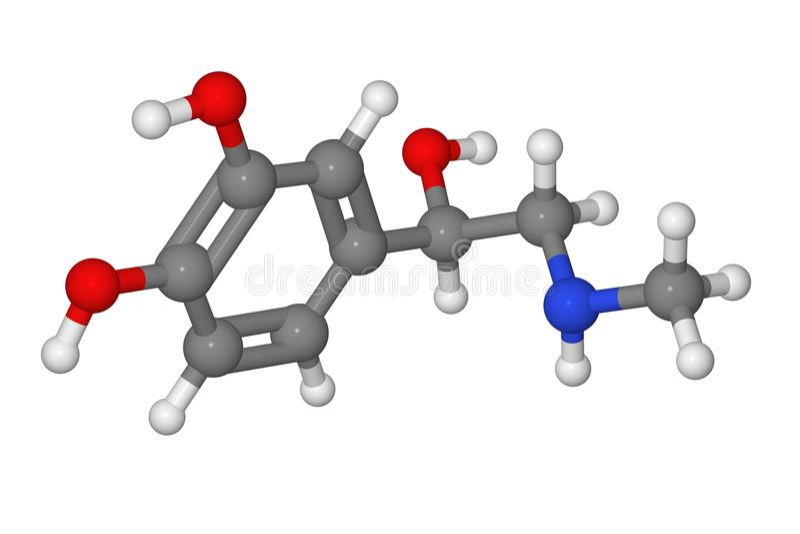 Het model van de bal en van de stok van adrenalinemolecule vector illustratie