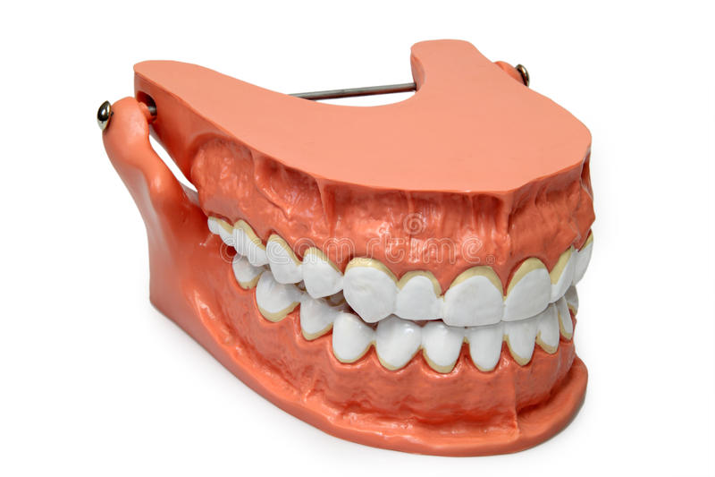 Het model van tanden royalty-vrije stock foto