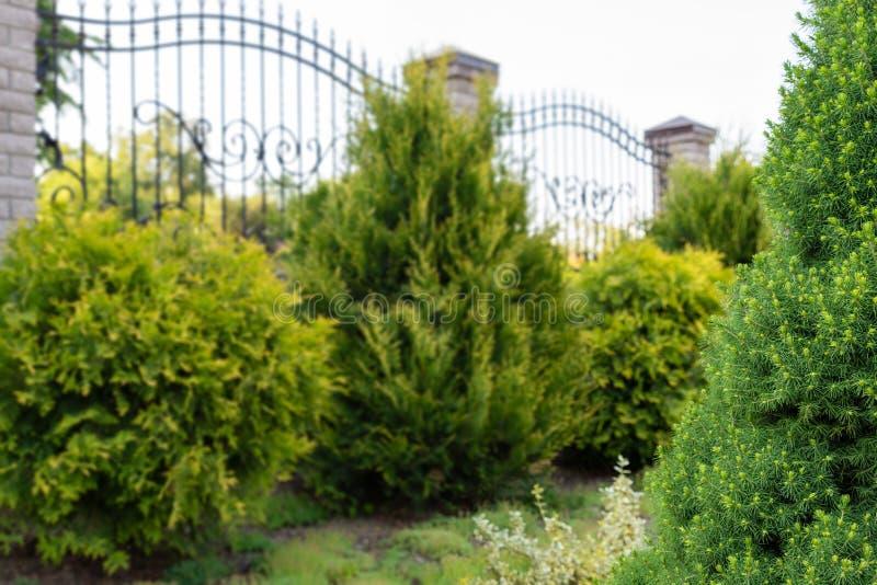 Het modelleren, de tuinierende diensten Nadruk op voorgrond, zachte achtergrond met copyspace stock foto