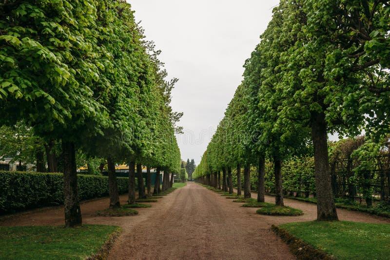 Het modelleren decoratief ontwerp Raws van bomen in parksteeg met wegen bij het Paleis van Petergof of Peterhof- stock foto's