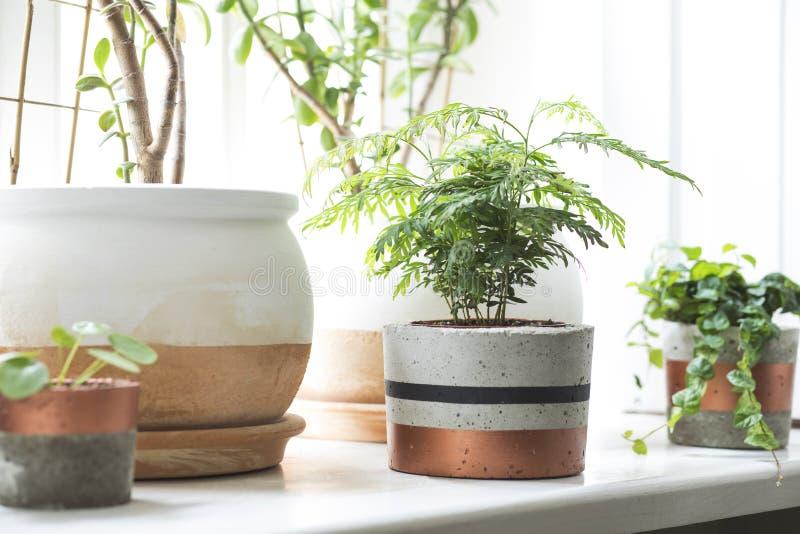 Het modieuze Skandinavische binnenland van de tuin van het keukenhuis met platns in verschillende ceramische en concrete potten o stock foto