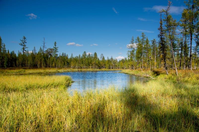 het moeras in het bos stock fotografie