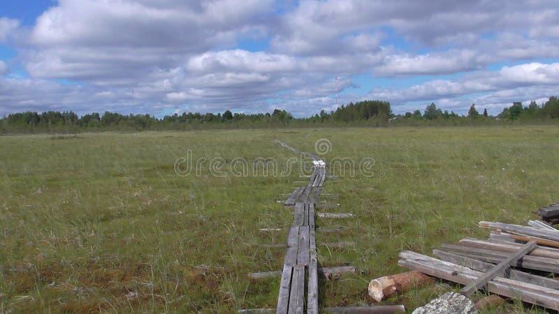 Het moeras van Karelië stock foto's