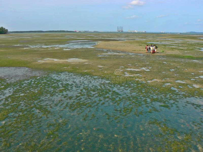 Het moerasland van Chekjawa - Singapore stock afbeelding