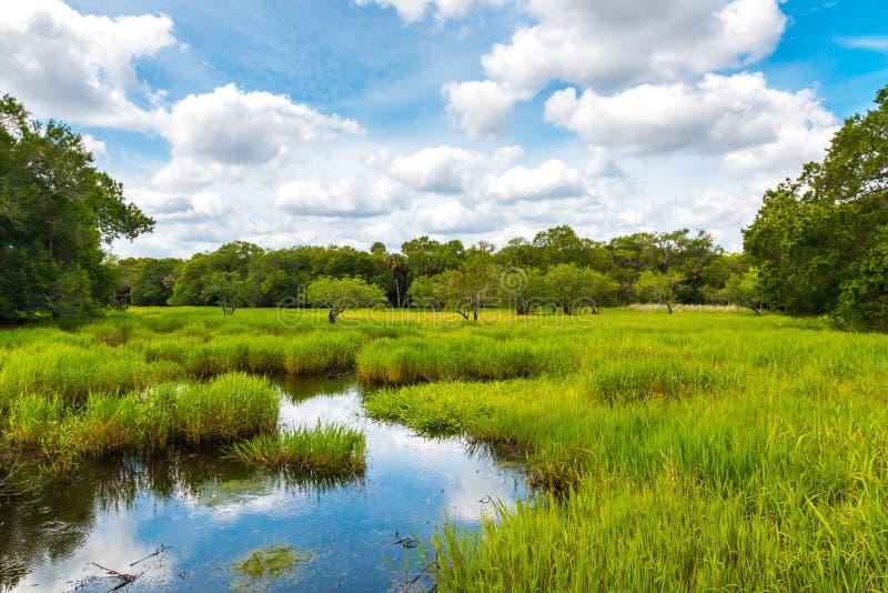 Het moerasland van Florida, de zomer natuurlijk landschap stock afbeeldingen