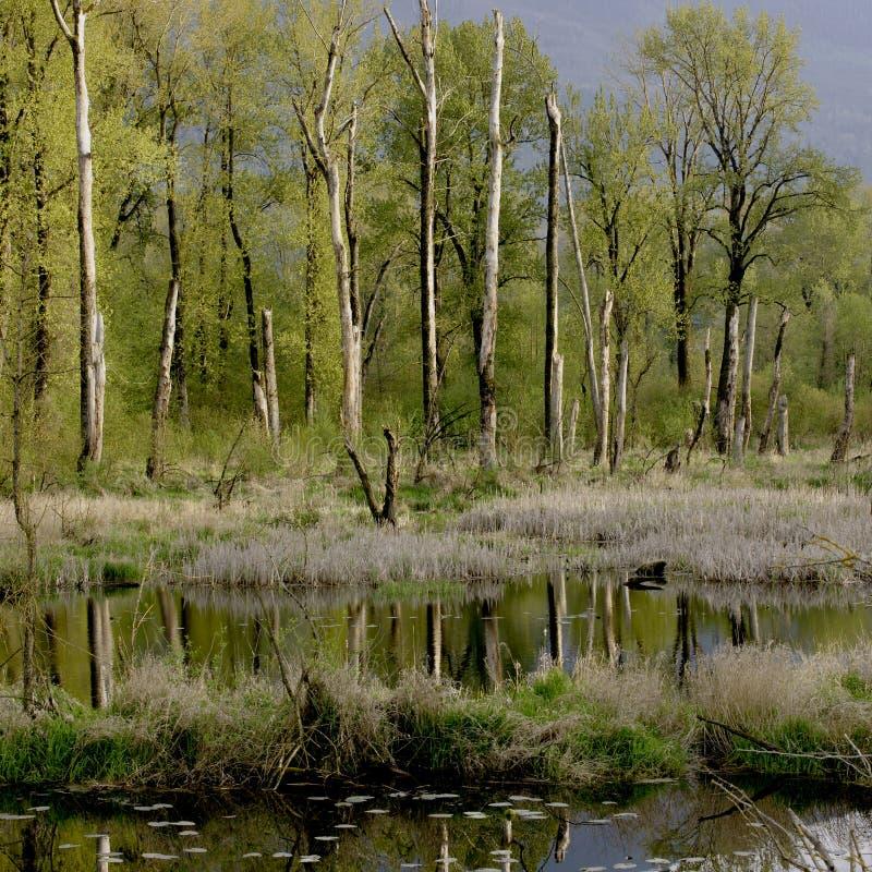 Het Moerasland van het moeras stock foto