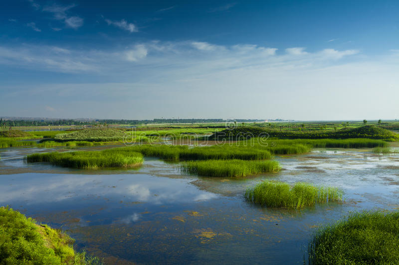 Het moerasland zonnig China van het riet stock fotografie
