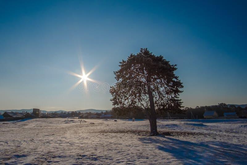 Het mooie abstracte aardlandschap van een boom op een gebied onder de zon glanst, speelt vorm mee royalty-vrije stock afbeeldingen