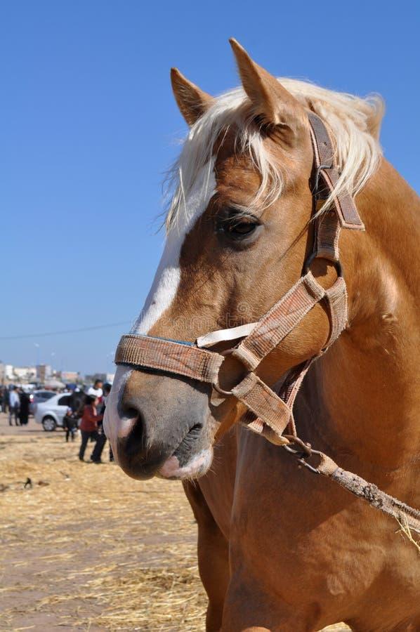 Het mooie Beeld van het paardhoofd - beeld jpeg stock afbeelding