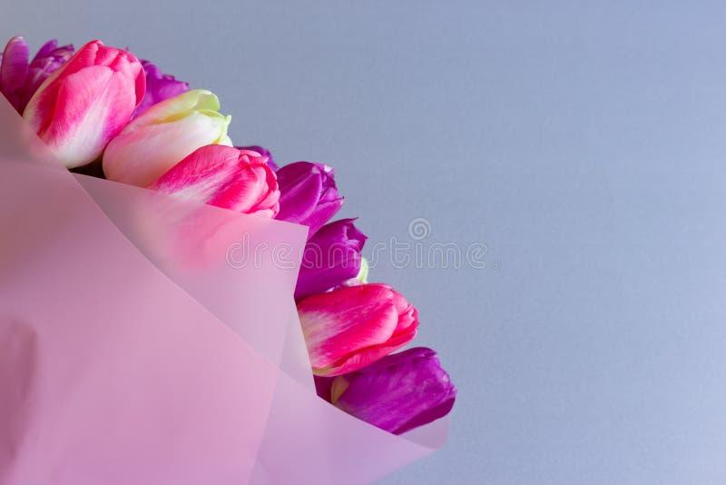 Het mooie boeket van verse kleurrijke roze purpere tulpen bloeit op grijze neutrale achtergrond met copyspace royalty-vrije stock fotografie