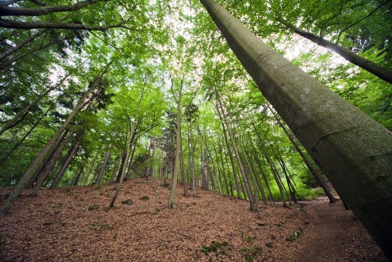 Het mooie boslandschap in de zomer. stock afbeeldingen