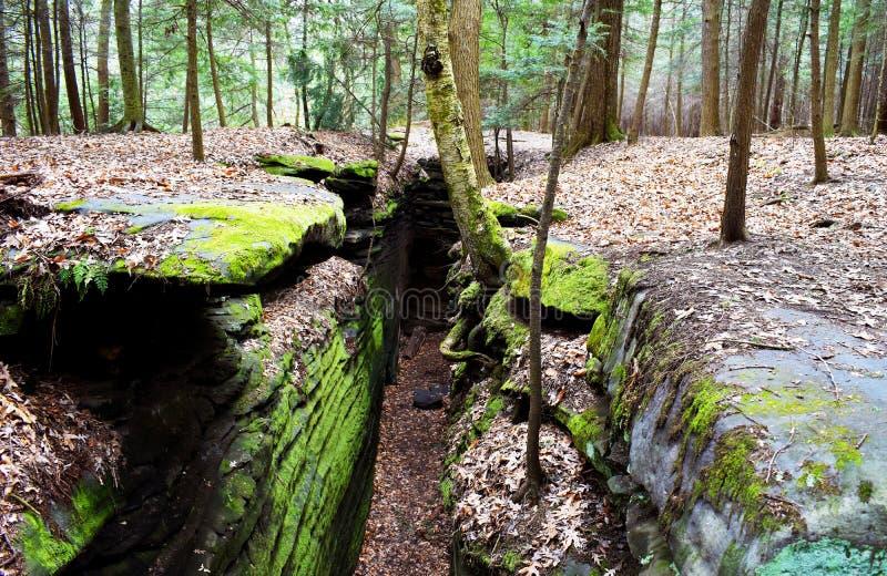 Het mooie boslandschap met de grote groene bemoste canion op de richels gaat in Cuyahoga-Vallei over dichtbij Cleveland, Ohio, de royalty-vrije stock foto's