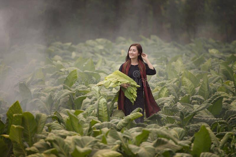 Het mooie de vrouw van Thailand werken is gelukkig werkend tabakslandbouwbedrijf royalty-vrije stock afbeelding