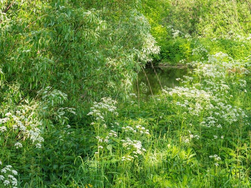 Het mooie de zomerlandschap, bomen met overvloedig gebladerte, een meer kan door de bomen worden gezien royalty-vrije stock fotografie