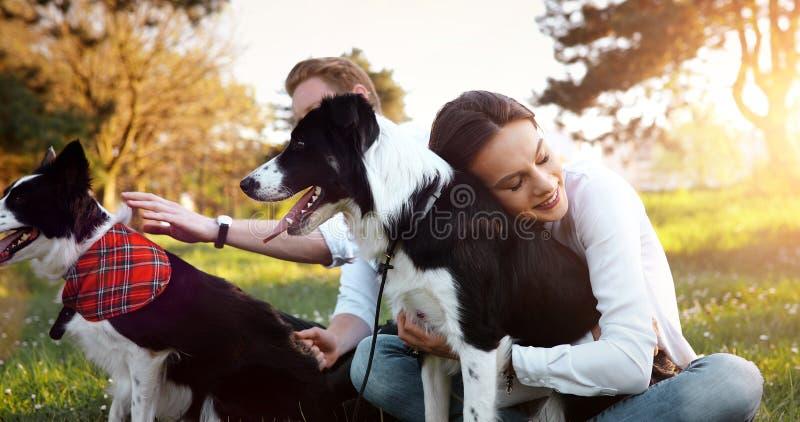 Het mooie donkerbruine spelen met hond in aard tijdens zonsondergang stock afbeeldingen