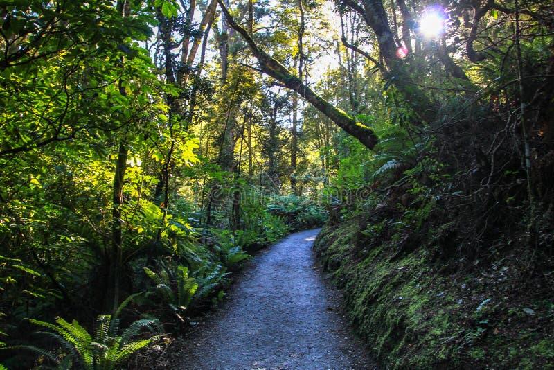 Het mooie donkere bos van Nieuw Zeeland royalty-vrije stock fotografie