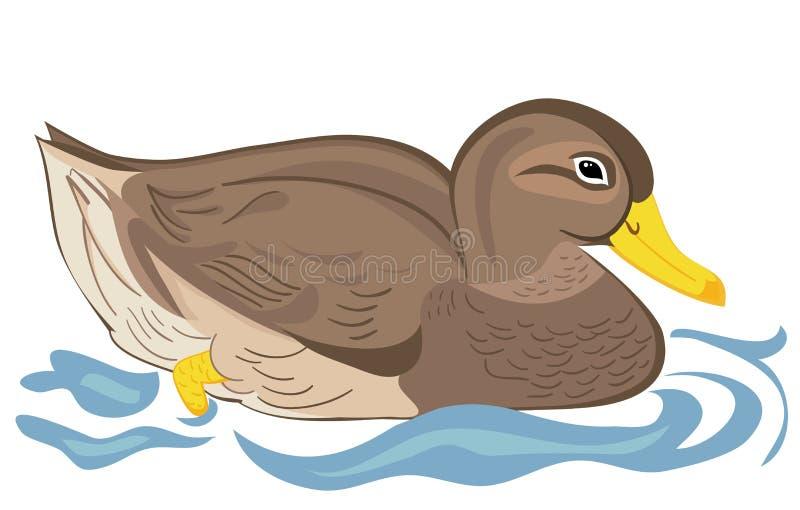 Het mooie eend zwemmen vector illustratie