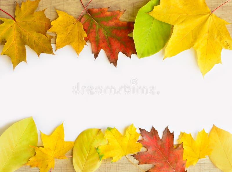 Het mooie frame van de Herfst Bladeren over hout stock fotografie