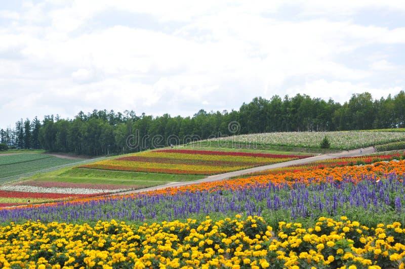 Het mooie gebied van de regenboogbloem op de heuvel royalty-vrije stock foto's