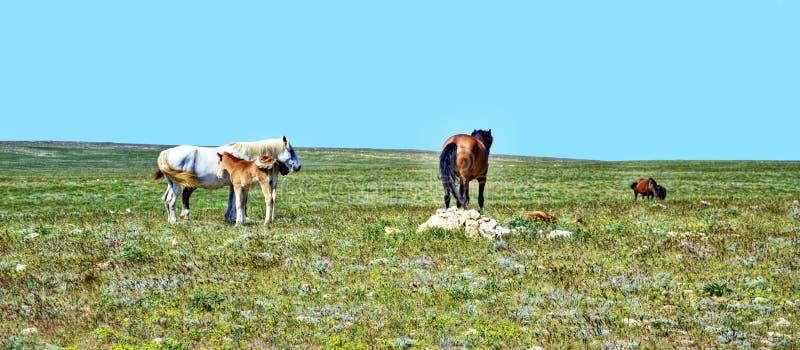 Het mooie gebied van kuddepaarden, groot ontwerp voor om het even welke doeleinden Mooie aardachtergrond Mooi plattelandslandscha royalty-vrije stock fotografie