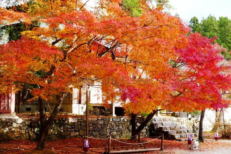 Het mooie gebladerte van esdoornmomiji in Jingoji-tempel Kyoto royalty-vrije stock foto