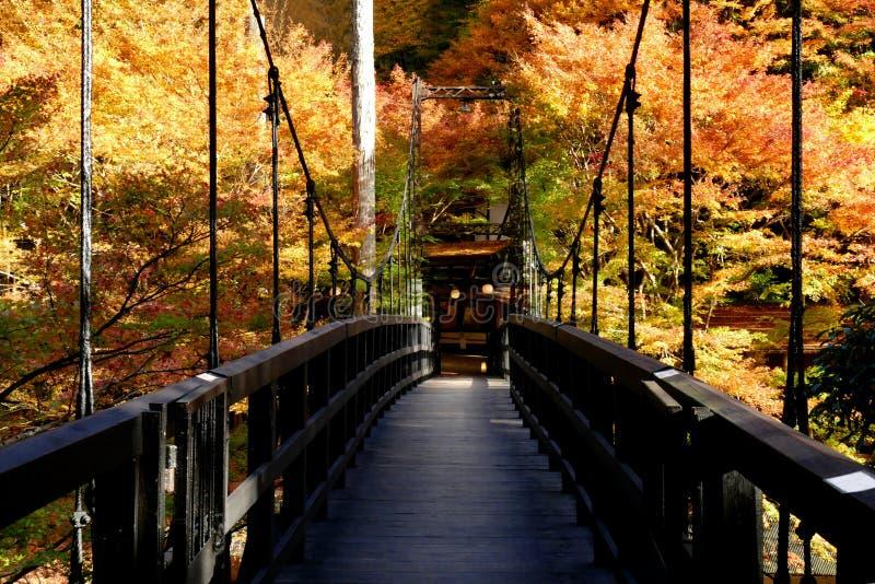 Het mooie gebladerte van esdoornmomiji in Kyoto Japan stock fotografie