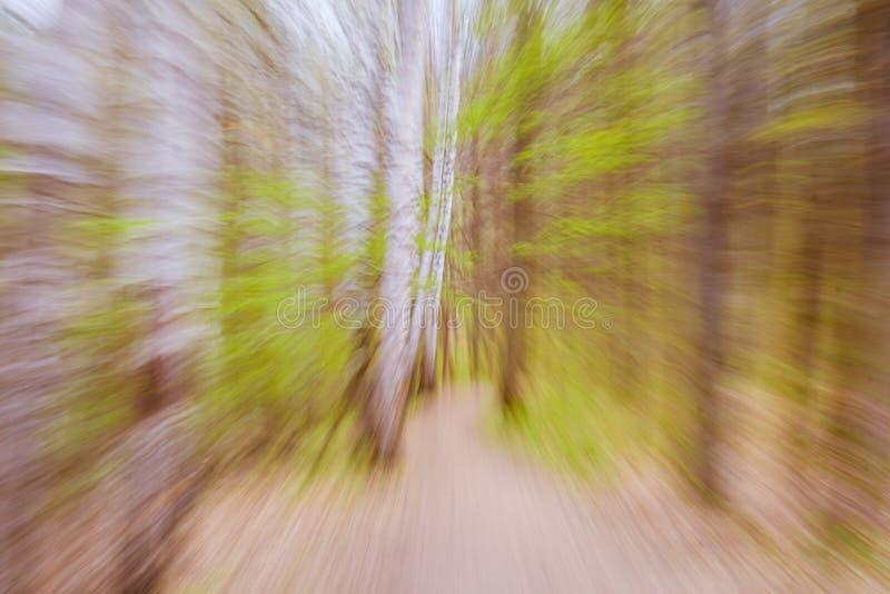 Het mooie geheimzinnige bos van het kleurenseizoen met weg uitstekende filter royalty-vrije stock foto's
