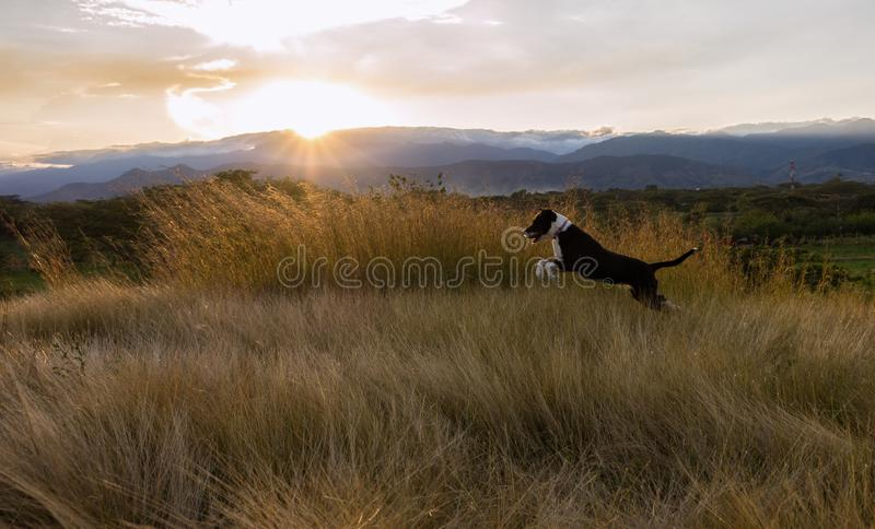 Het mooie huisdier die pret op een zonnige middag hebben stock foto