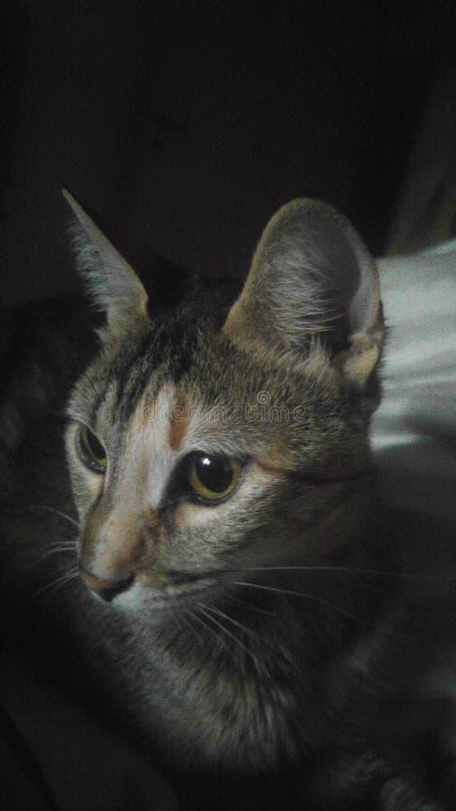 Het mooie kat letten op royalty-vrije stock afbeelding