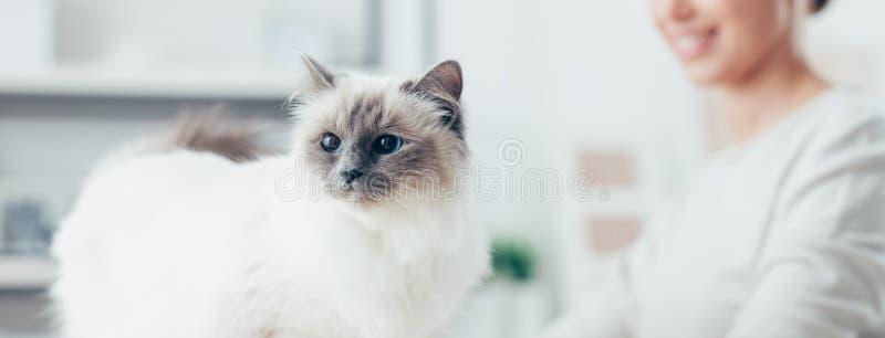 Het mooie kat stellen stock foto