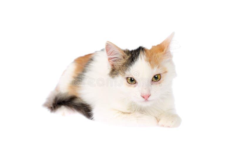 Het mooie 4-5 katje die van het maanden oudcalico ziek met ontstoken ogen, gezwelde oogleden en lossing liggen Geïsoleerdj op wit royalty-vrije stock foto