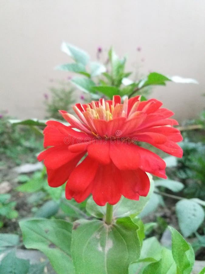 Het mooie kijken flower& x28; natuurlijke beauty& x29; royalty-vrije stock foto's