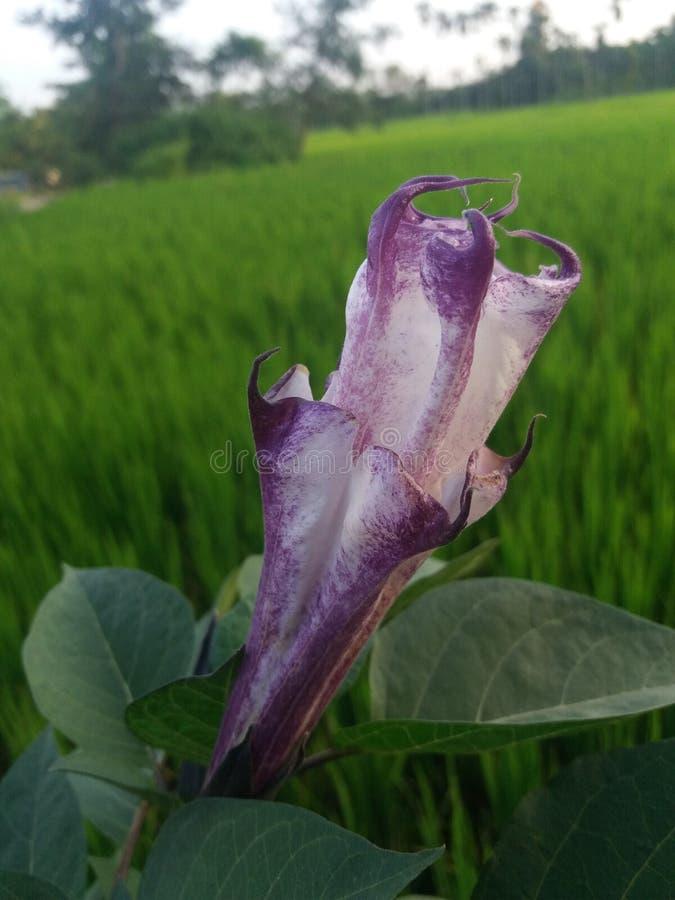Het mooie kijken flower& x28; natuurlijke beauty& x29; royalty-vrije stock afbeeldingen