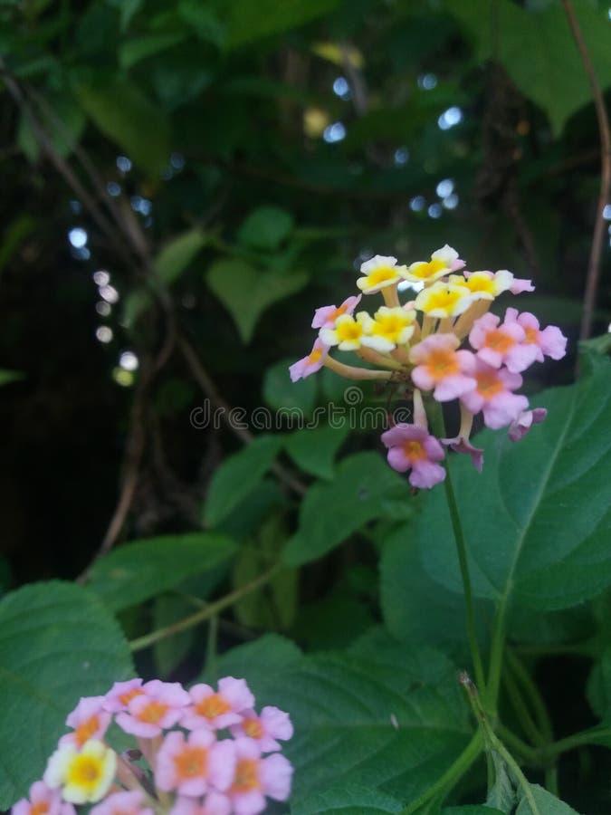 Het mooie kijken flower& x28; natuurlijke beauty& x29; royalty-vrije stock foto