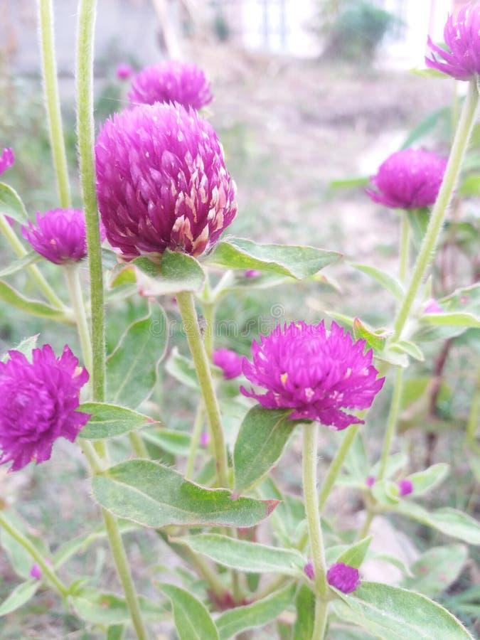 Het mooie kijken flower& x28; natuurlijke beauty& x29; stock afbeeldingen
