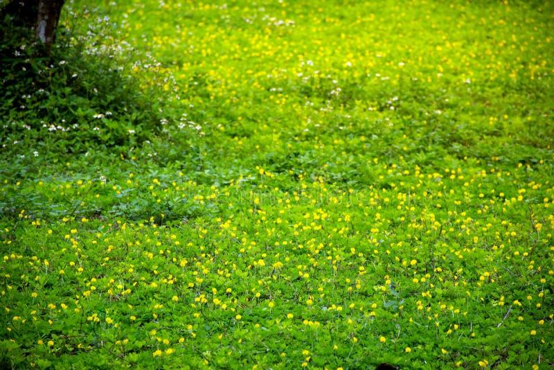 Het mooie landschap bekijkt de kleur van groene gebiedsachtergrond in de ochtend voelend vers stock foto's