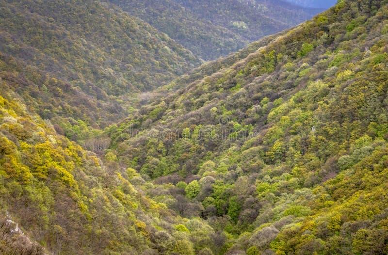 Het mooie landschap, kleurrijke bomen op de bergen, sluit omhoog heuvels royalty-vrije stock foto