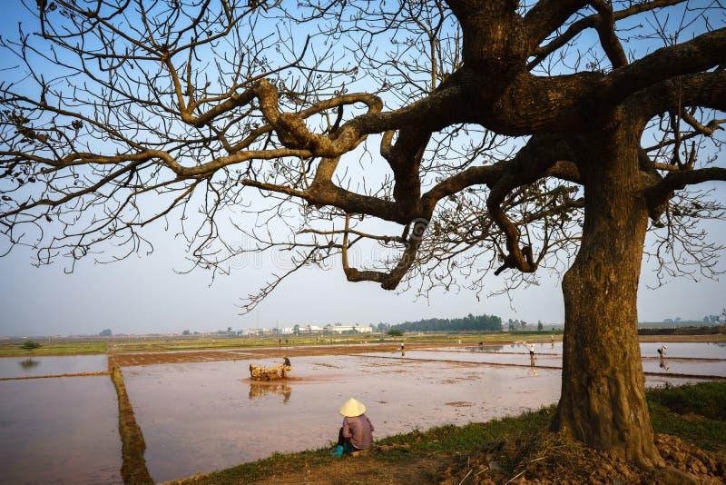 Het mooie landschap met bomensilhouet bij zonsondergang met Vietnamese vrouwenlandbouwer zit onder de boom ziend padieveld stock foto