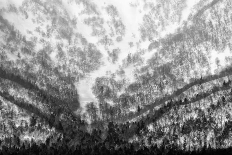 Het mooie landschap van de bergwinter met bomen en sneeuw De aard van Hokkaido, Japan Heuvels in de winter Het reizen in de winte stock afbeeldingen
