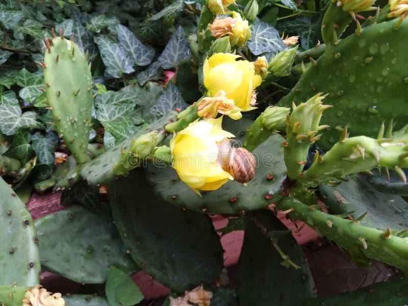 Het mooie landschap van de cactusregeling met gele bloesem royalty-vrije stock foto's