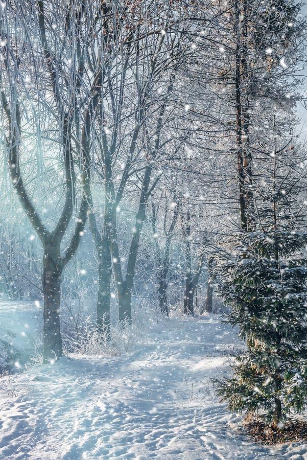 Het mooie landschap van de de winterochtend in het stadspark stock afbeeldingen