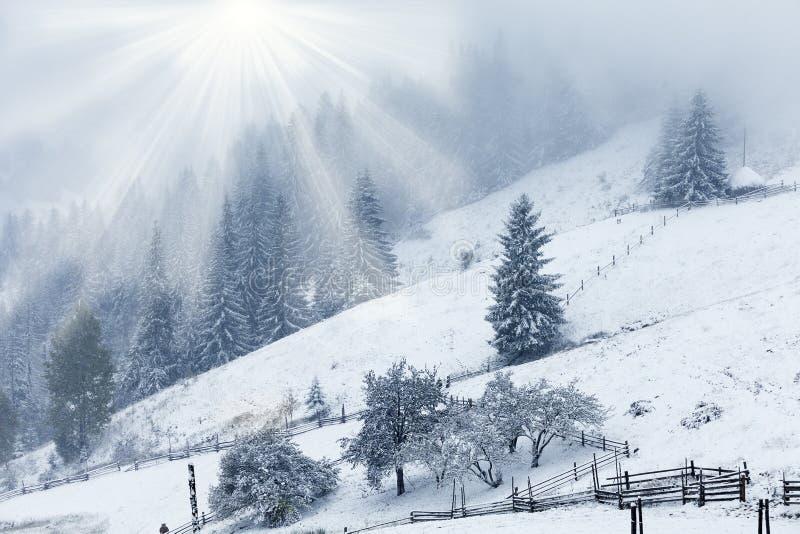 Het mooie landschap van de winterbergen met sneeuwsparbos stock foto's