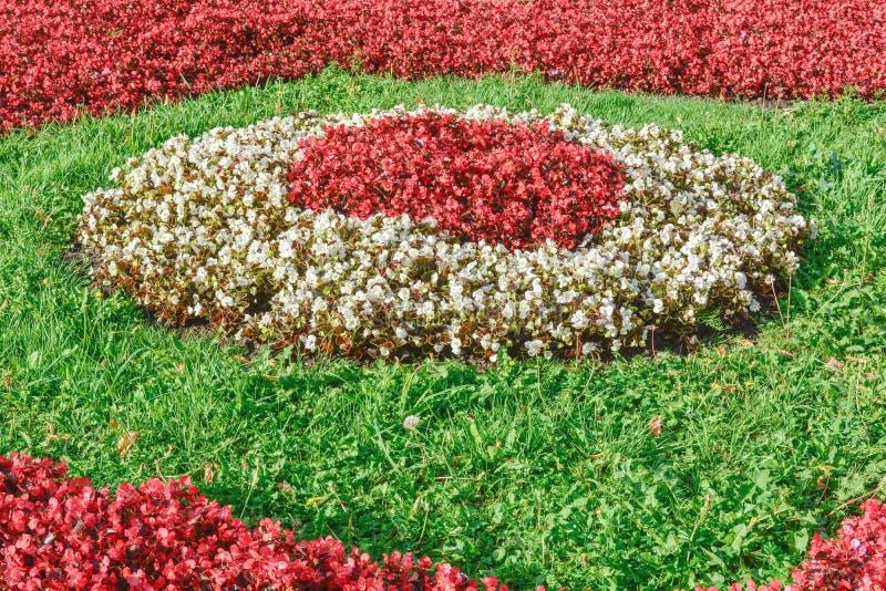 Het mooie Landschap van de de Zomertuin Decoratief Bloembed met Bloemenregeling royalty-vrije stock fotografie