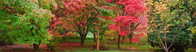 Het mooie landschap van het de aardbeeld van de Daling van de Herfst stock afbeelding