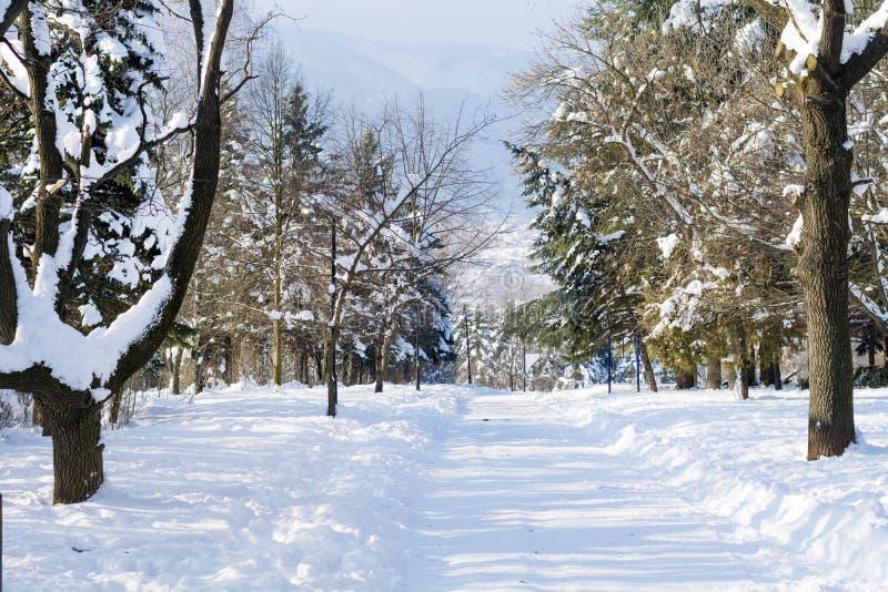 Het mooie landschap van het de Winterpark van Sofia, Bulgarije stock foto