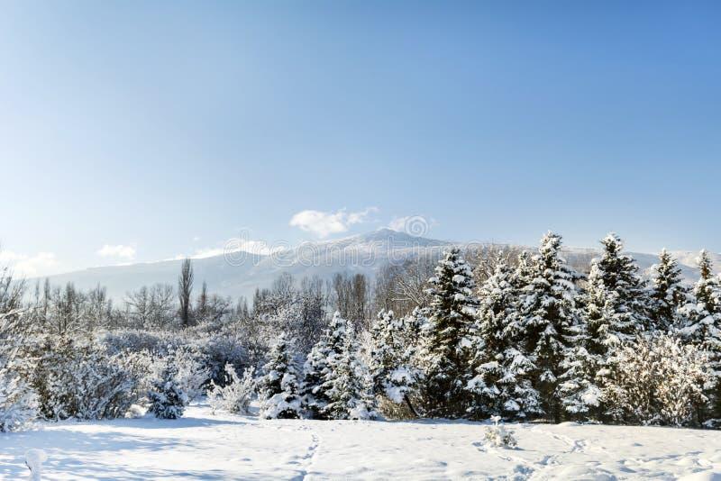 Het mooie landschap van het de Winterpark van Sofia, Bulgarije stock afbeeldingen