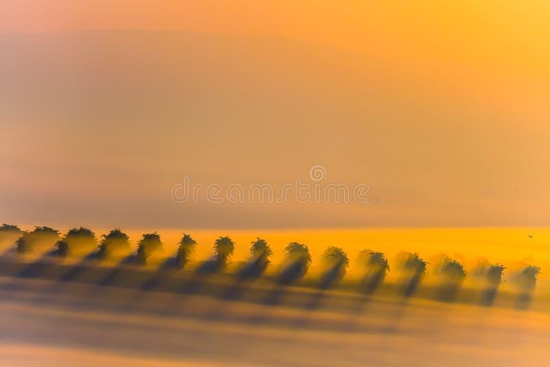 Het mooie landschap van plattelandswijngaarden in Zuid-Moravië tijdens verbazende zonsopgang met mist Zonstralen door de mist Agr stock afbeeldingen