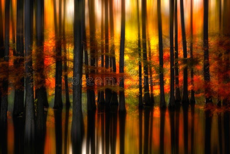 Het mooie landschap van Roemenië, de herfst in overstroomd bos met bezinning royalty-vrije stock afbeeldingen